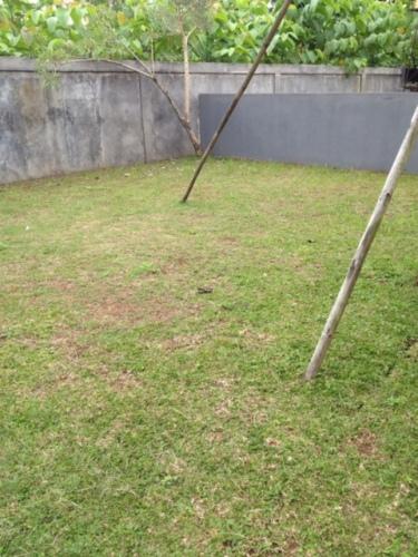 Ini minjam halaman tetangga, soalnya halam sendiri belum hijau